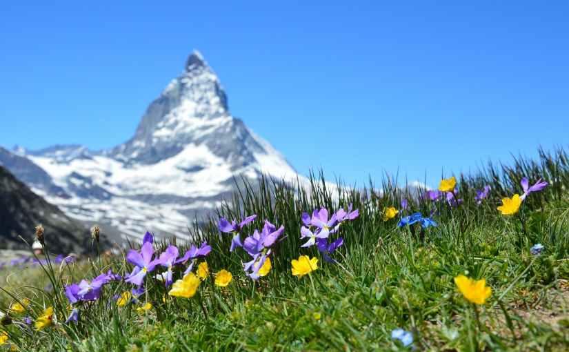 Der Tourist, der durch die Schweiz reiste und dabei zahlreichen Gemsenbegegnete