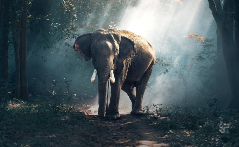 Gesund und stark wie ein indischer Elefant mitAyurveda