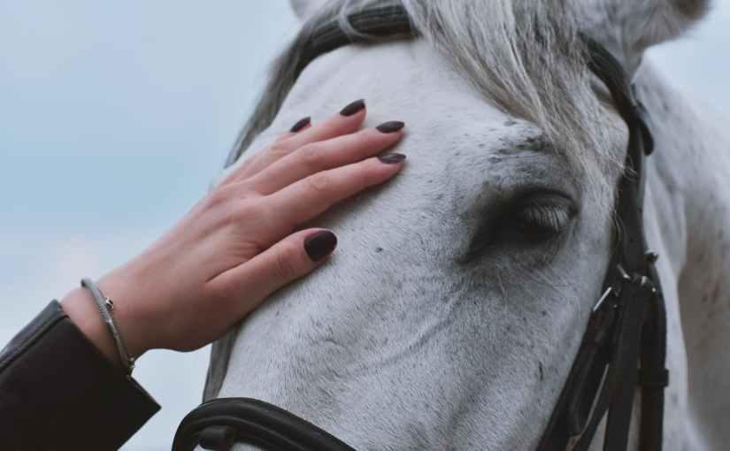 Lieber ein Pferd als einenMann